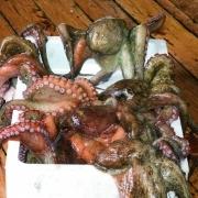 明石浦漁業協同組合